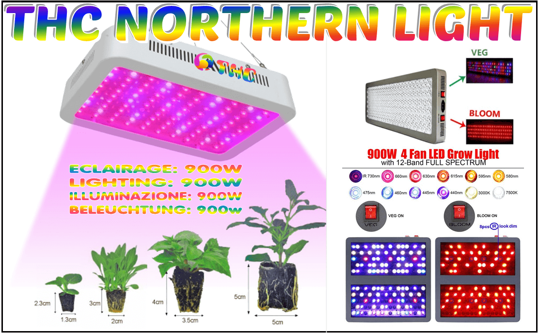 LEDs thc nothern light eclairage pour multiplier les recolte de fruits et legumes